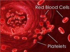 RBC Platelet